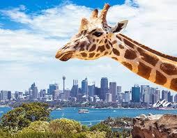 澳洲中国驾照翻译